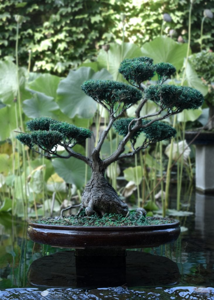 Some Important Facts Related To Bonsai Trees