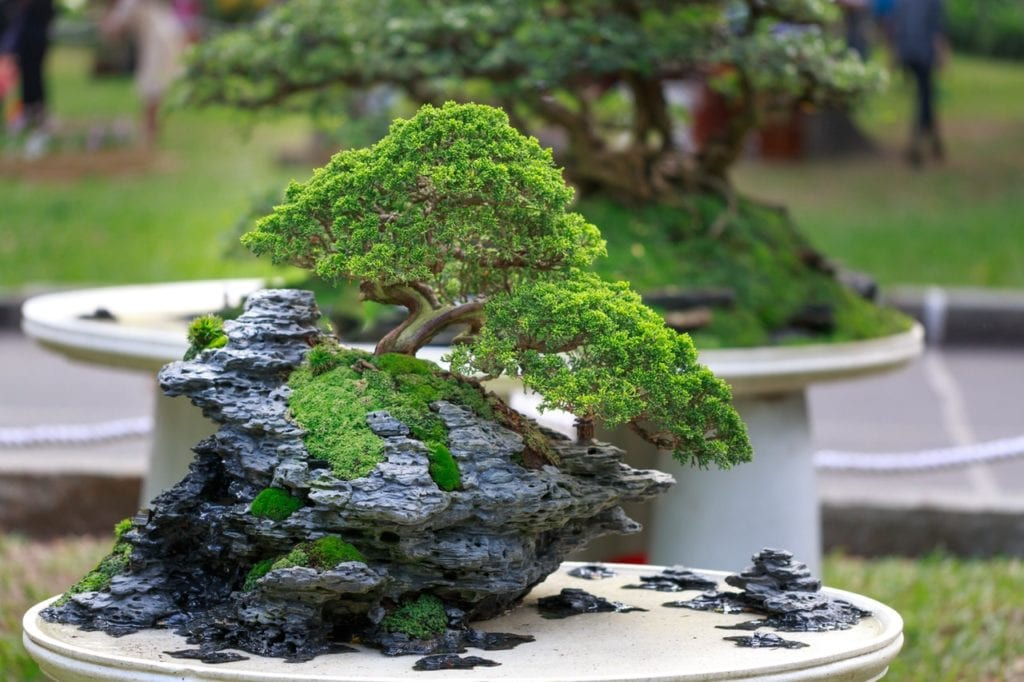 Japanese Traditions And Aesthetics: Bonsai History