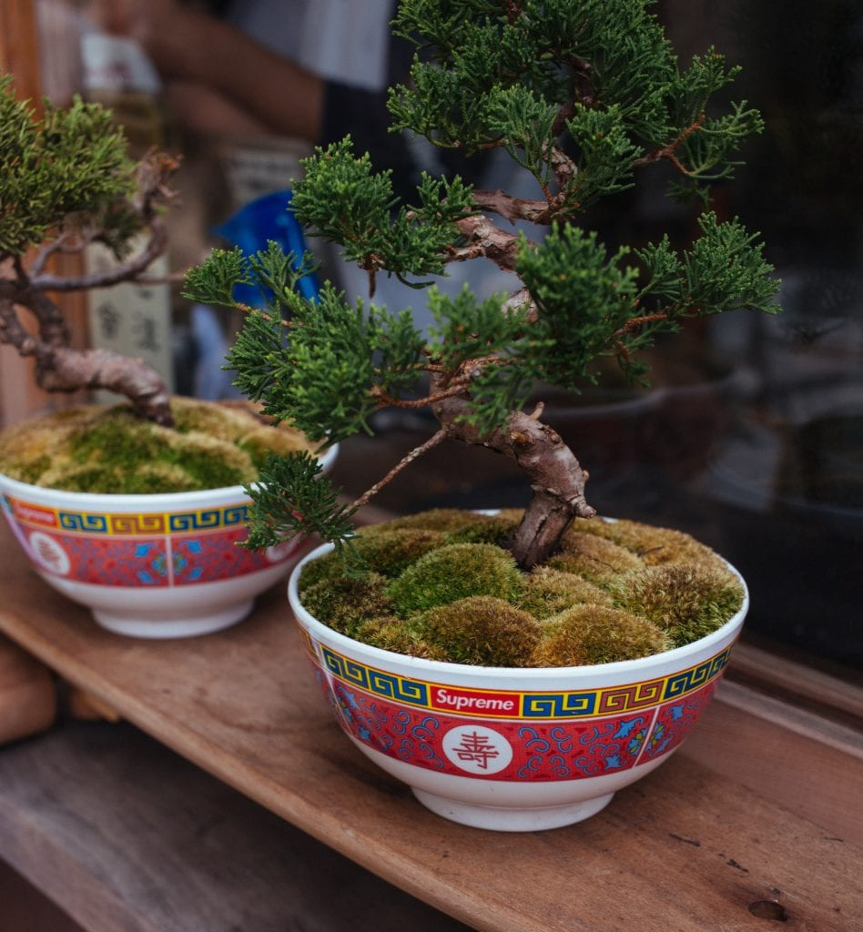 Ficus Bonsai: Variety Overview And Guidelines To Follow