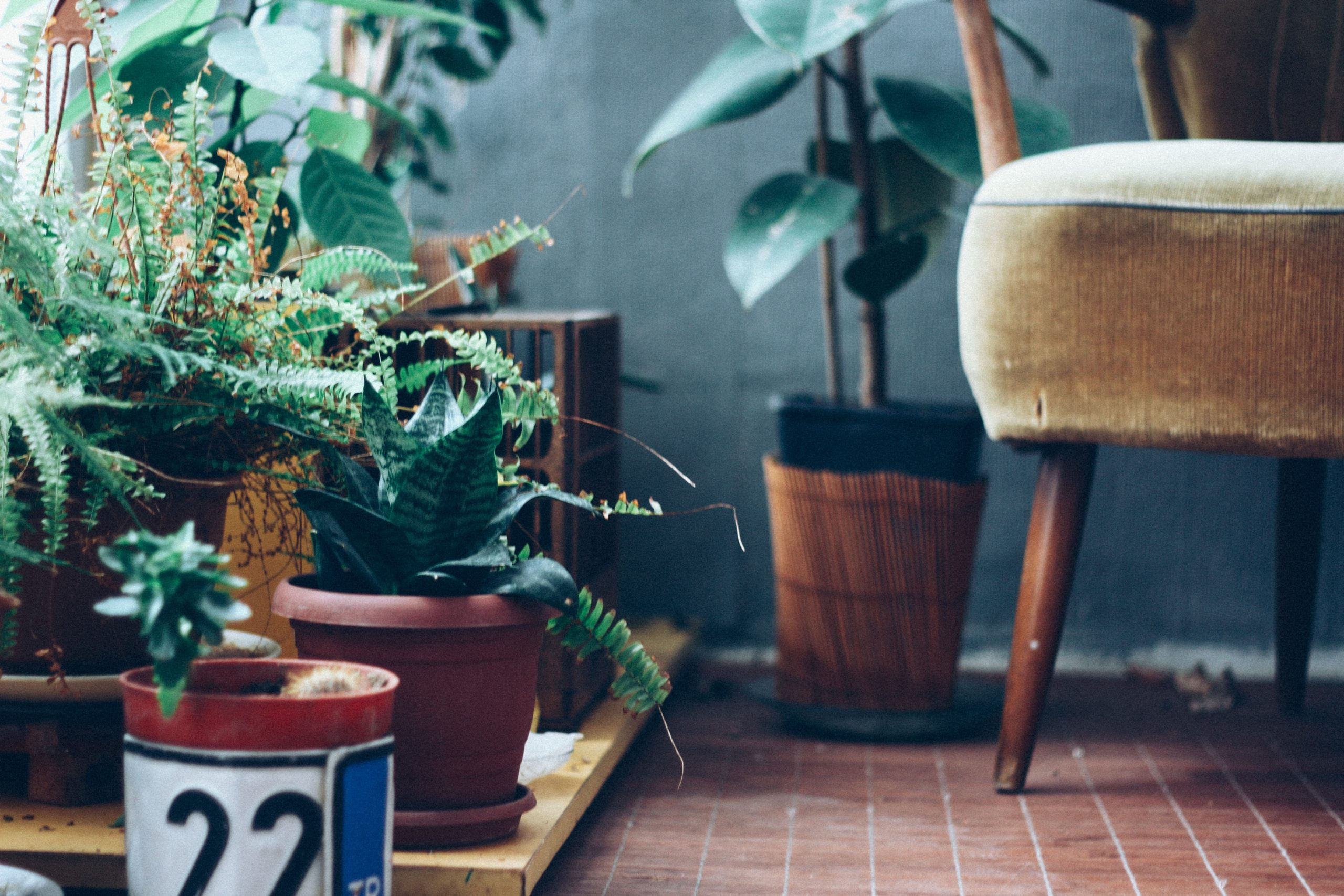 Bonsai Tree Care for Novices—Everything You Require to Know