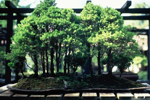 How To Take Appropriate Care Of Your Bonsai Tree