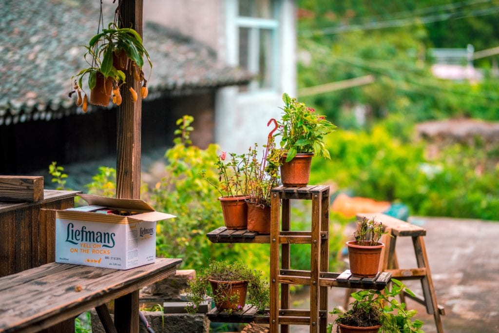 Selecting A Bonsai Pot That Suits Your Tree