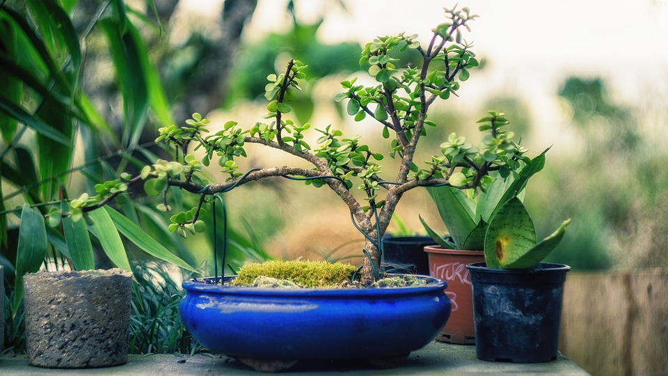 Choosing A Right Home For Your Bonsai (Bonsai Pots)