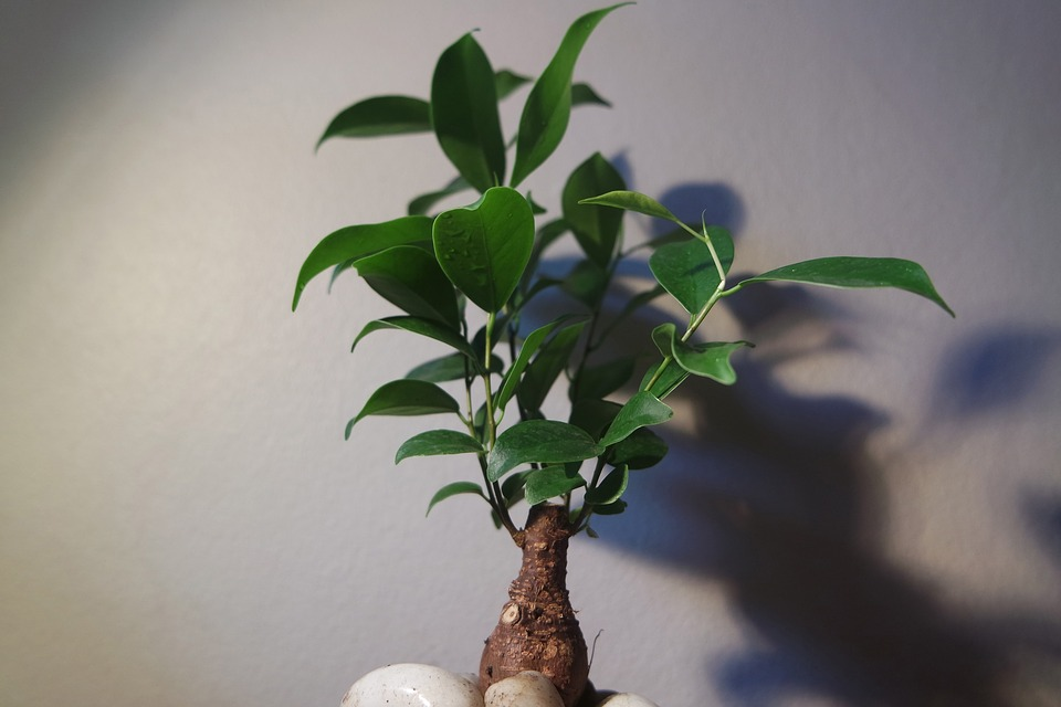 Indoor Bonsai Care: Hack In The Tips For Indoor Bonsai Care