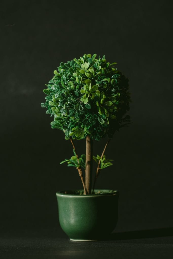 Bonsai Myth List: 10 Common Myths About Bonsai