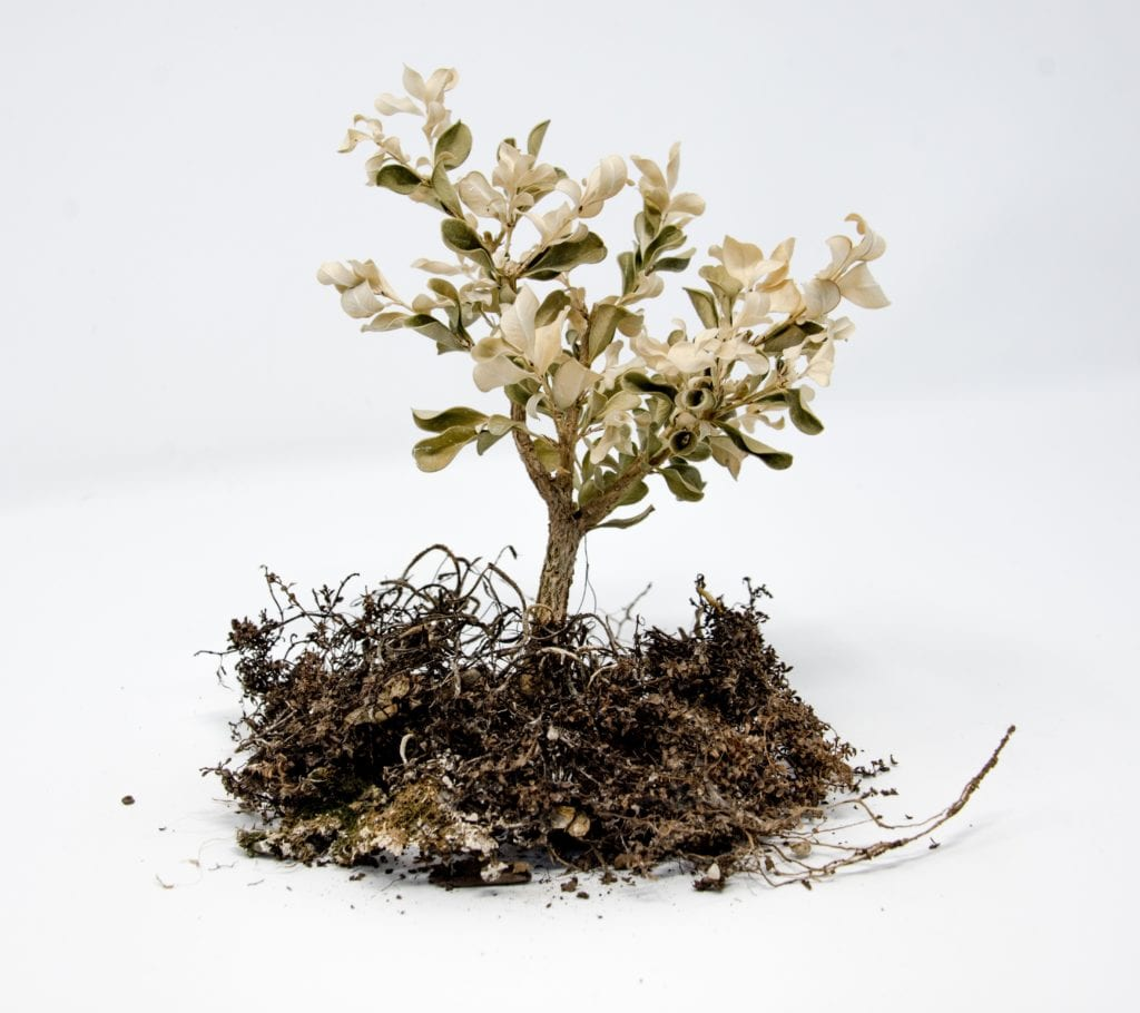 Bonsai Soil: Know The Method To Mix A Bonsai Soil