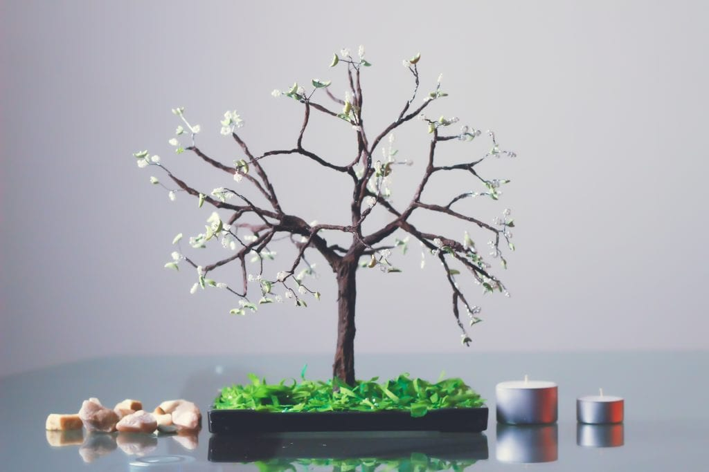 """""""Bonsai Tree"""" A Better Alternative For House Design And Flawless Health"""